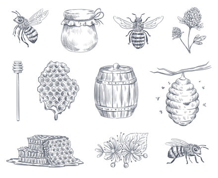 Bee engraving. Honey bees, beekeeping farm and honeyed honeycomb vintage hand drawn vector illustration set