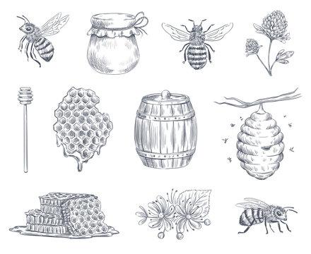 Bee engraving. Honey bees, beekeeping farm and honeyed honeycomb vintage hand drawn vector illustration set