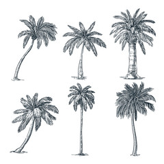 Tropical coconut palm trees set. Vector sketch illustration. Hand drawn tropical plants and floral design elements.