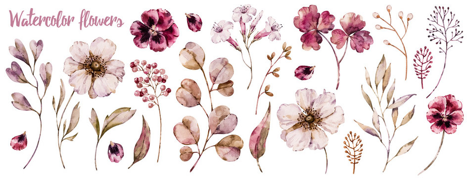 Floral elements collection, watercolor flower set