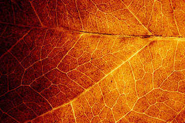 Abstract organic texture of leaf. Wall mural