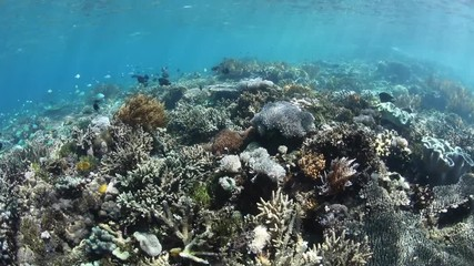 Fototapete - A thriving coral reef grows along the edge of one of the many scenic islands in Komodo National Park, Indonesia. This tropical area is known for its high marine biodiversity.