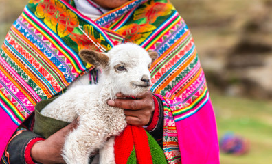 Photo sur Plexiglas Lama Peruvian women with little alpaca lamb