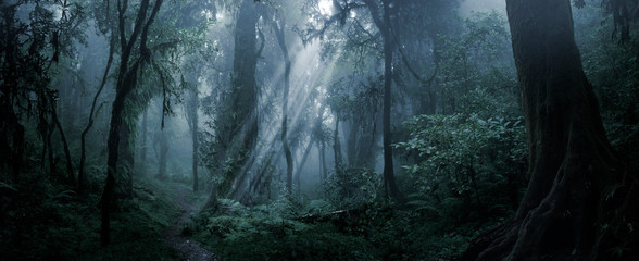 Poster Zwart Deep tropical forest in darkness