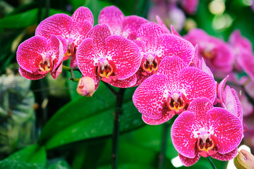 Papiers peints Orchidée Beautiful pink orchid flowers bloom in the summer