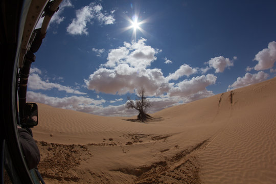 A sturdy bush while travelling during a offroad adventure trip in the dry Tunisian desert in the northern part of the Sahara proving its durability under these extreme climate conditions