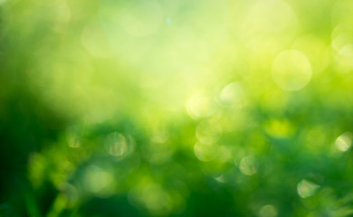Abstract blurred image of nature green with sun light flare, summer texture background or wallpaper Wall mural