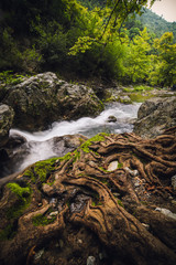 Wall Mural - waterfall in the forest