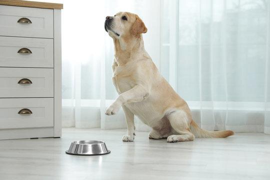 Yellow labrador retriever with feeding bowl on floor indoors