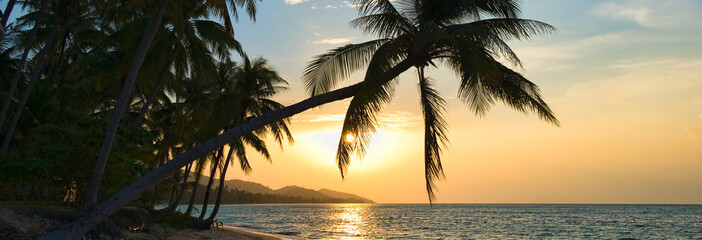 Beautiful horizontal image breathtaking sunset over Siam gulf on the Samui island at sunset, leaning palm trees above the water sun down golden lights. Asia, Thailand