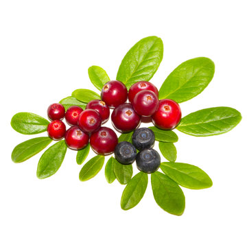 cranberries and bilberries with leaves isolated on white background