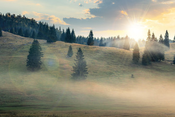 Wall Murals Forest foggy sunrise in romania countryside. spruce trees on hills. beautiful mountain scenery in autumn