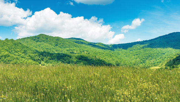 grassy rural field in mountains. beautiful countryside scenery in summer. fluffy clouds on a blue sky above the ridge