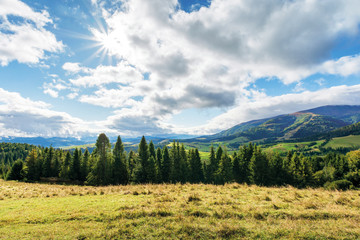 countryside landscape in mountains. spruce forest behind the meadow in weathered grass. rural area in the distant valley, gorgeous sunny weather with amazing cloudscape on a windy day of september.
