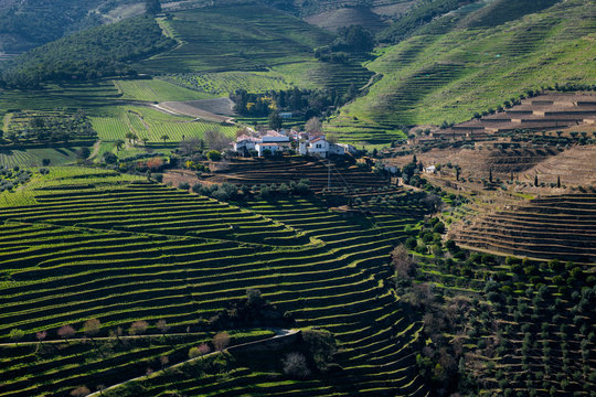 View of the terraced vineyards in the Douro Valley near the village of Pinhao, in Portugal; Concept for travel in Portugal and most beautiful places in Portugal