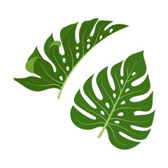tropical palm leaves isolated