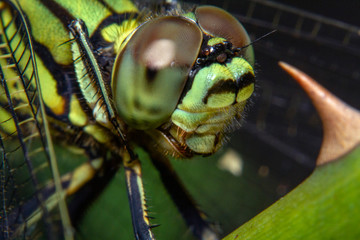 A Dragonfly resting on the plant branches in a close-up picture