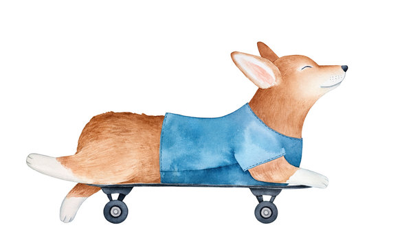Joyful welsh corgi pembroke puppy in blue t-shirt, lying on skateboard. Side view. Handdrawn watercolour graphic paint on white background, cutout element for design, poster, print, sticker, banner.
