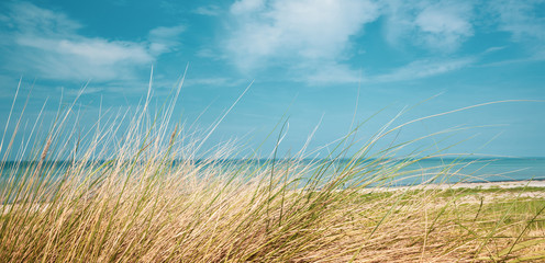 a panorama picture of the beach of the Baltic Sea in summer with dune grass in the foreground and blue sea water in the background and blue sky in the background Wall mural