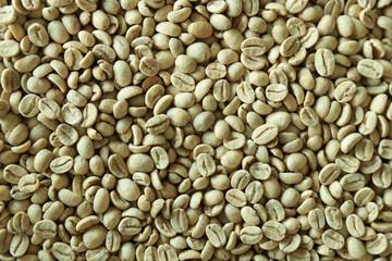 raw green fresh coffee bean, nature