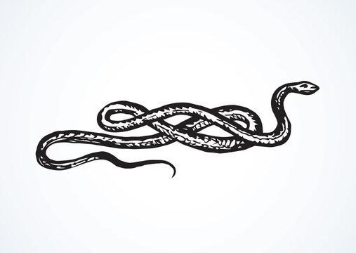 Snake. Vector drawing