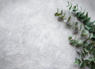 Eucalyptus branches on a concrete background