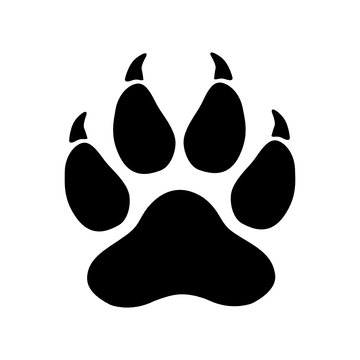 Vector high quality illustration of a predator (tiger, lion, cat)footprint silhouette isolated on white background
