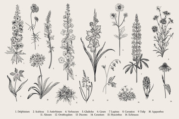 Garden flowers. Set. Vintage vector botanical illustration. Black and white