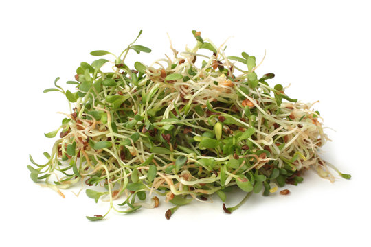 Heap of alfalfa sprouts