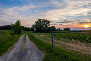 country road in the countryside