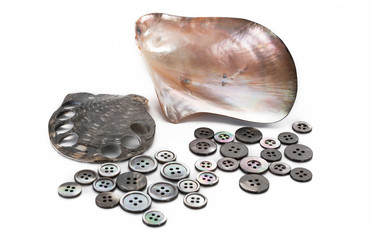 mother of pearl and pearl buttons on the sea shell