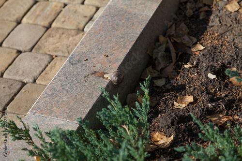 Snail crawling on granite curb
