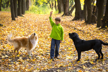 Little boy playing with two dogs on the autumn forest
