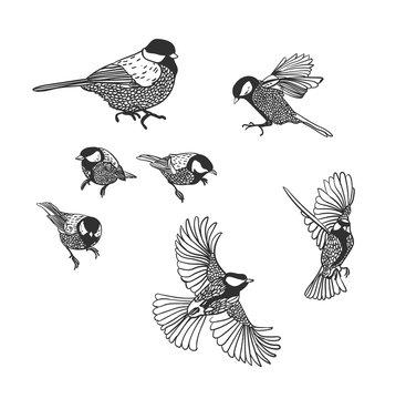 tit vector sketch birds set design elements