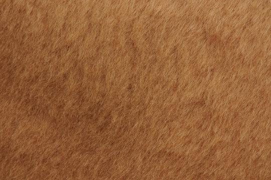 Short brown cub fur