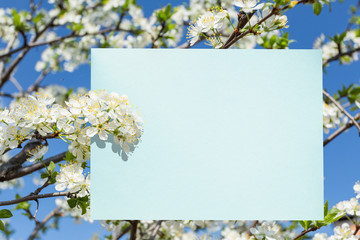 Blue paper blank between cherry branches in blossom. Blue sky at the background.