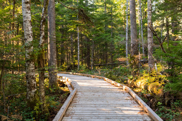 Wooden trail next to the visitor center of North Cascades, surrounded by trees