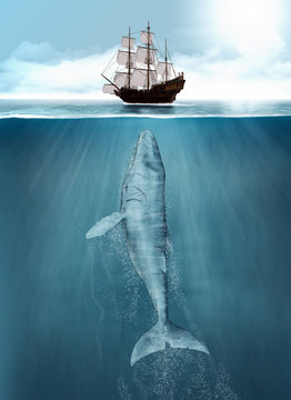 Humpback Whale hunting, ship attack