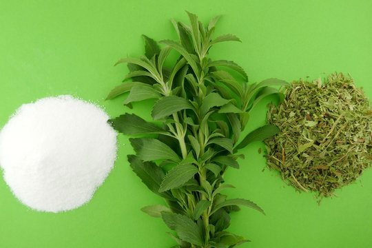 Stevia rebaudiana. Stevia  herb twigs, dry shredded stevia and white powder on a bright green background.Natural sweetener in powder from stevia plant
