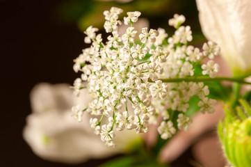 Photo sur Aluminium Muguet de mai 小さな白い花の集合体