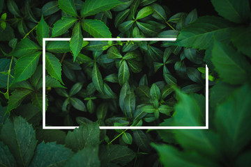 White frame on fresh green leaves background Wall mural