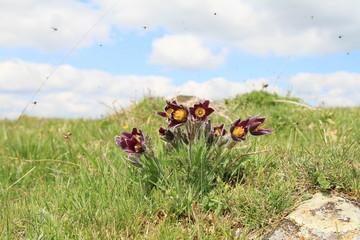 Fotobehang Vlinders Fleurs en 2019