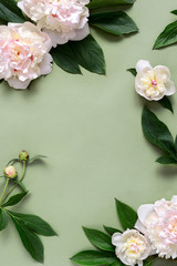 Peonies background with copy space