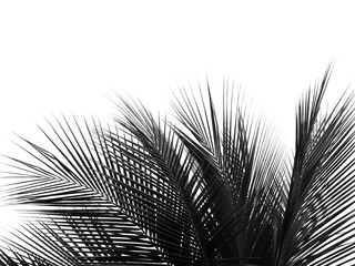 Wall Mural - beautiful palms leaf on white background