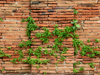 old brick wall with green plant