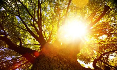 art Bright summer tree nature background