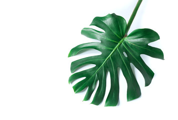 white tropical texture green leaf pattern background natural fresh monstera top view copy space