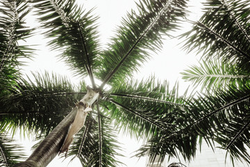 Tropical palm leaves, greenery. Creative layout, toned image filter Wall mural