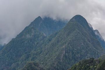 Foggy jungle landscape