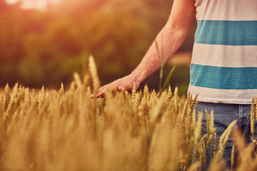 Man holding wheat in field. Nature concept.